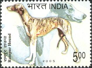 Rampur Hound stamp
