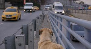 stray dog documentary